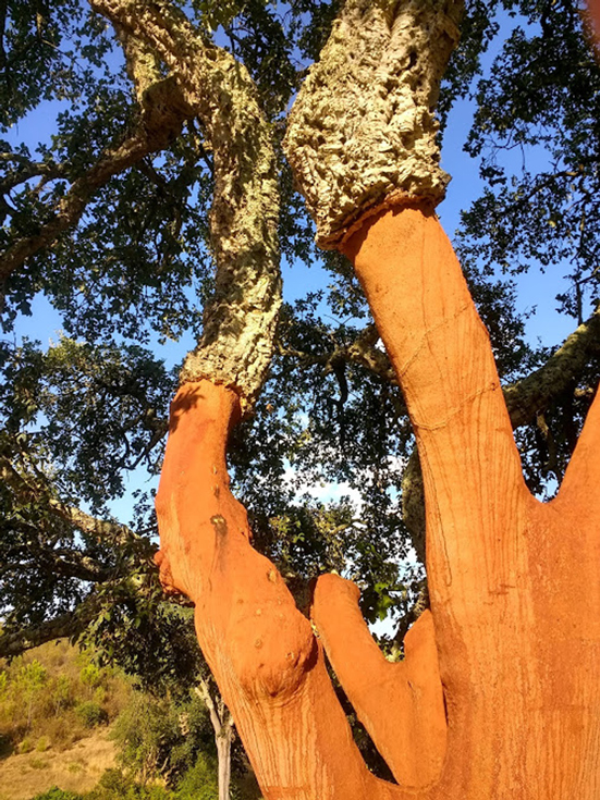 240dpi---BARE-NAKED-CORK-TREE-W&D-.jpg